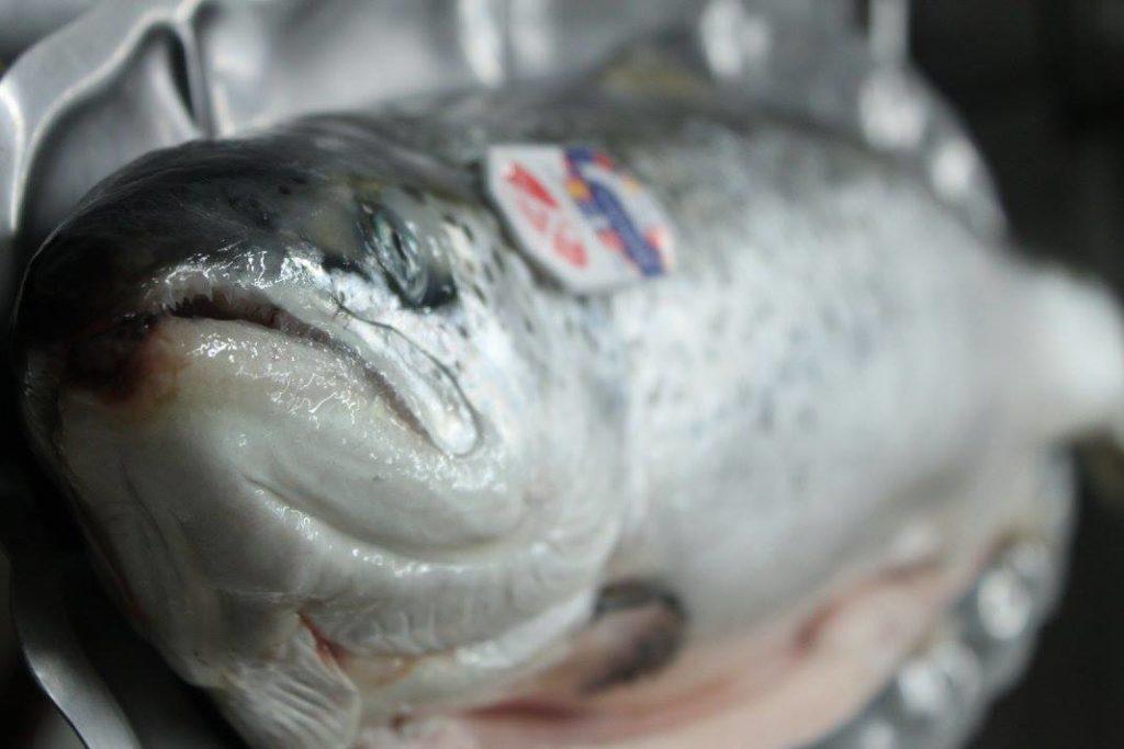 Lebot - Sélection de saumons frais - traiteur 44